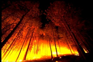 forest_fire_from_below-1024x682